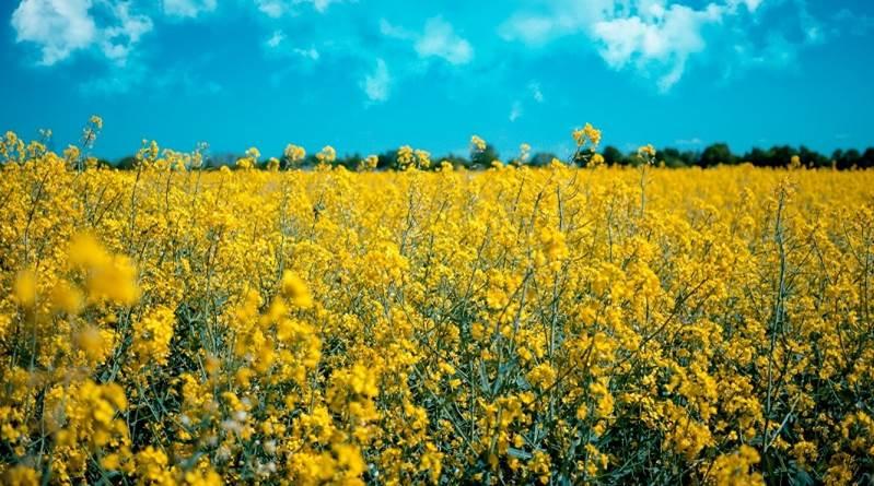 La THÈSE DU MOIS en Open Access (11) : «Biocarburants et transition énergétique»